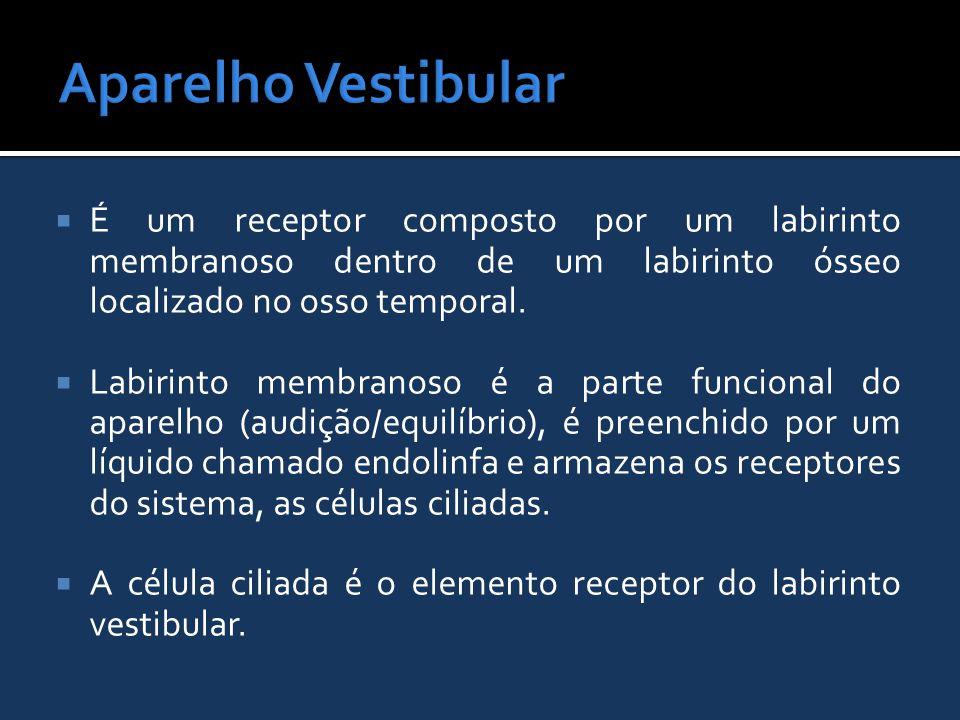 Aparelho Vestibular É um receptor composto por um labirinto membranoso dentro de um labirinto ósseo localizado no osso temporal.