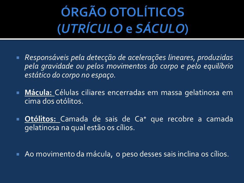 ÓRGÃO OTOLÍTICOS (UTRÍCULO e SÁCULO)