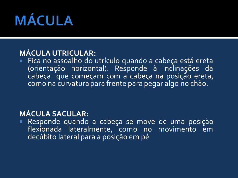 MÁCULA MÁCULA UTRICULAR:
