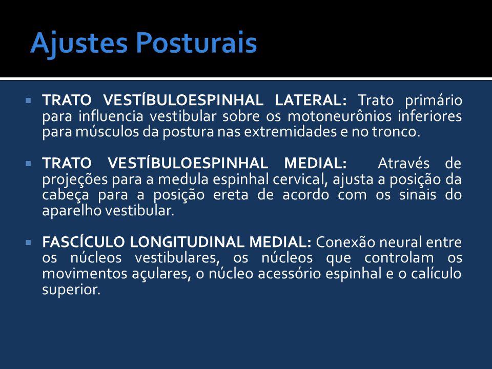 Ajustes Posturais