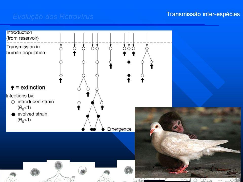 Evolução dos Retrovírus