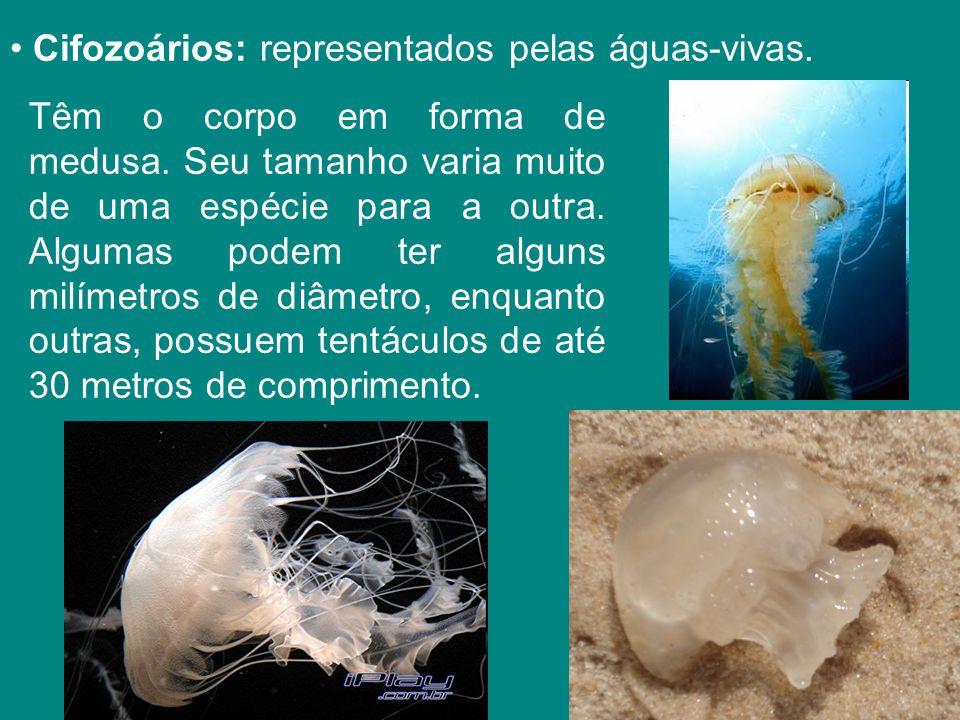 Cifozoários: representados pelas águas-vivas.