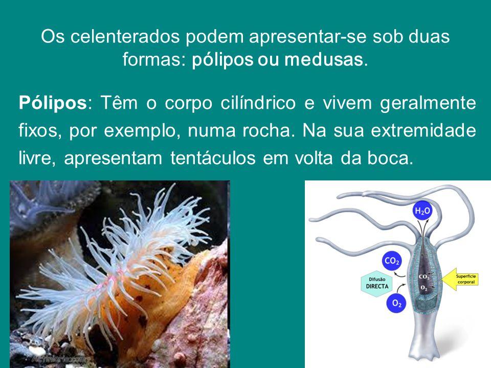 Os celenterados podem apresentar-se sob duas formas: pólipos ou medusas.