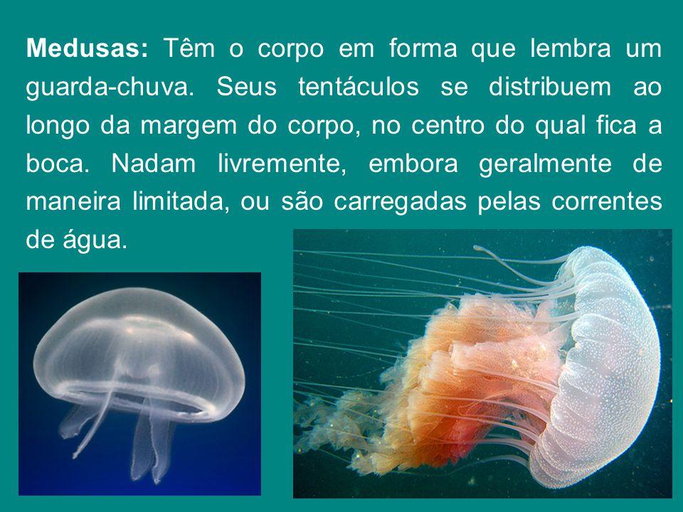 Medusas: Têm o corpo em forma que lembra um guarda-chuva