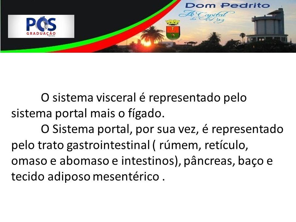 O sistema visceral é representado pelo sistema portal mais o fígado.