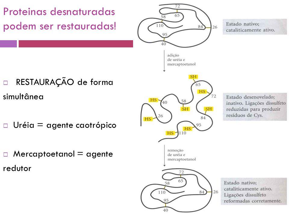 Proteinas desnaturadas podem ser restauradas!