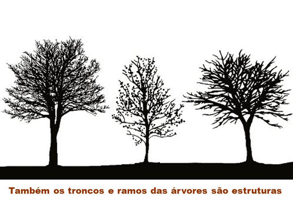 Também os troncos e ramos das árvores são estruturas