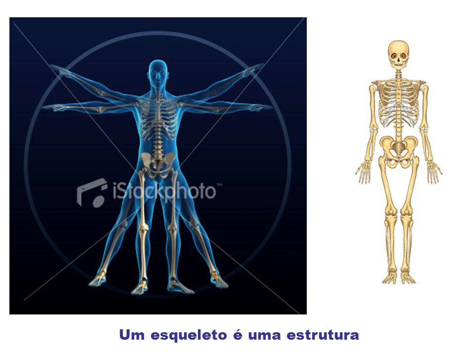 Um esqueleto é uma estrutura