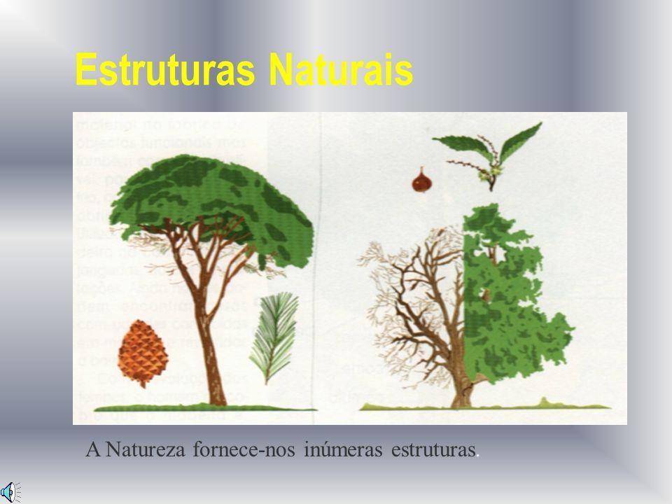 Estruturas Naturais A Natureza fornece-nos inúmeras estruturas.
