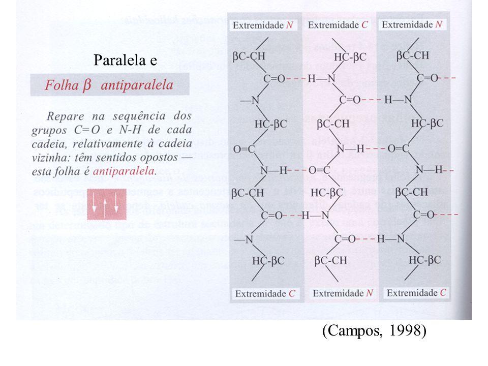 Paralela e (Campos, 1998)