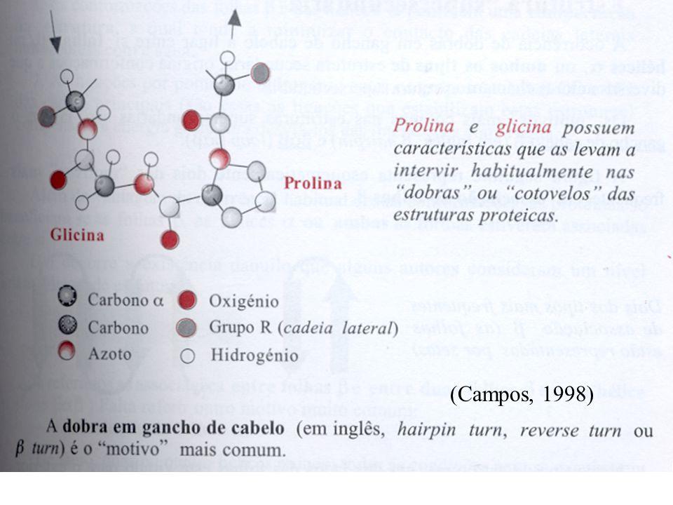(Campos, 1998)