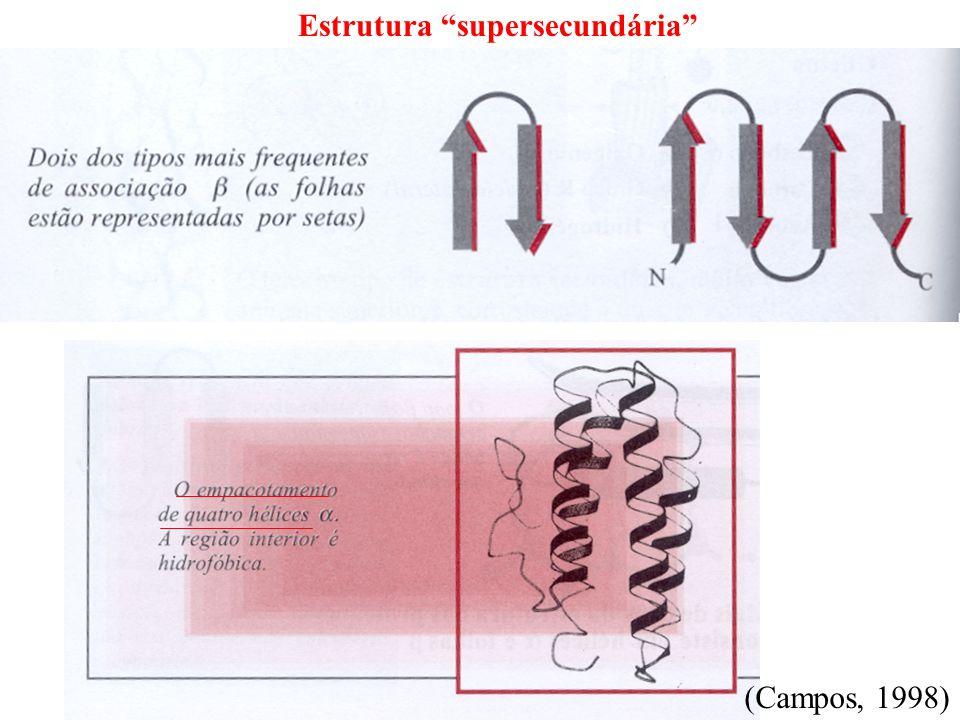 Estrutura supersecundária