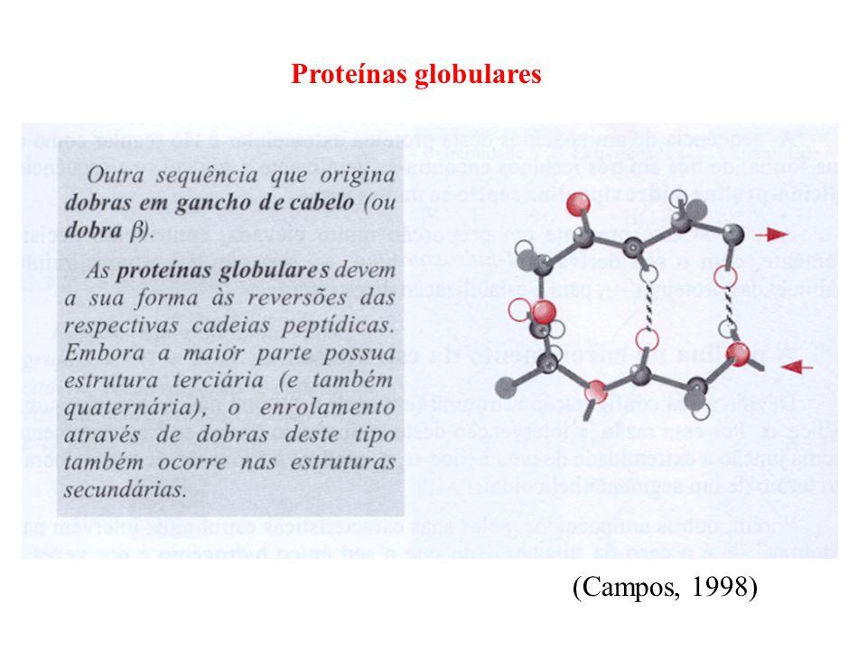 Proteínas globulares (Campos, 1998)