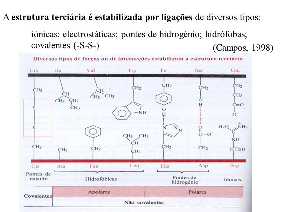 A estrutura terciária é estabilizada por ligações de diversos tipos: