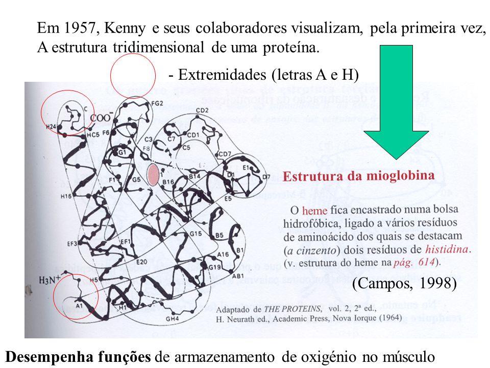 Em 1957, Kenny e seus colaboradores visualizam, pela primeira vez,