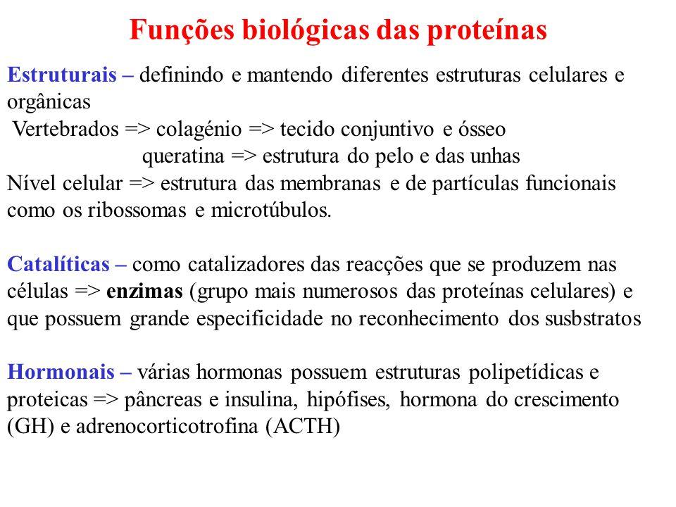 Funções biológicas das proteínas