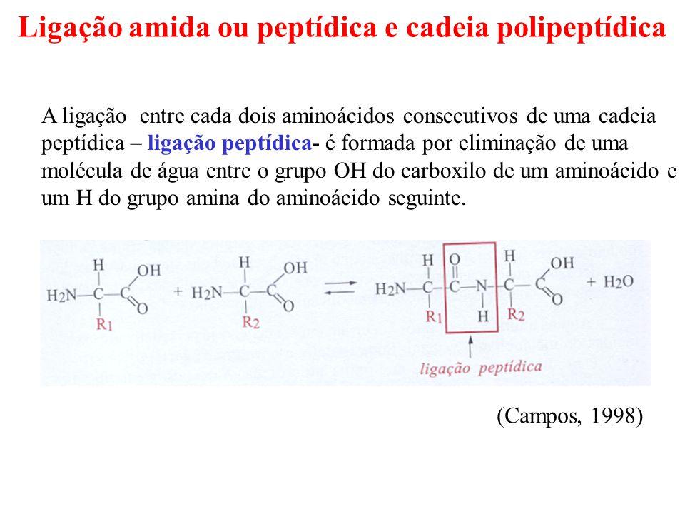 Ligação amida ou peptídica e cadeia polipeptídica