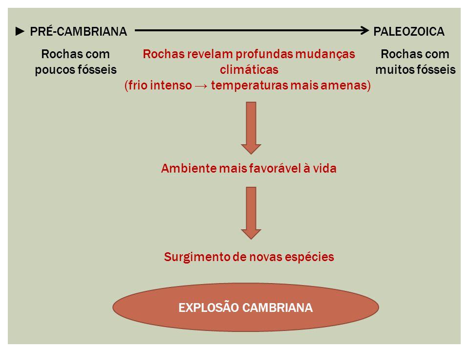 ► PRÉ-CAMBRIANA PALEOZOICA