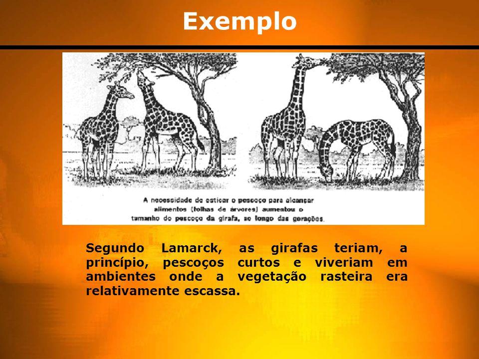 Exemplo Segundo Lamarck, as girafas teriam, a princípio, pescoços curtos e viveriam em ambientes onde a vegetação rasteira era relativamente escassa.