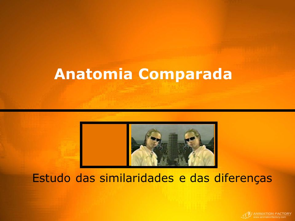 Estudo das similaridades e das diferenças