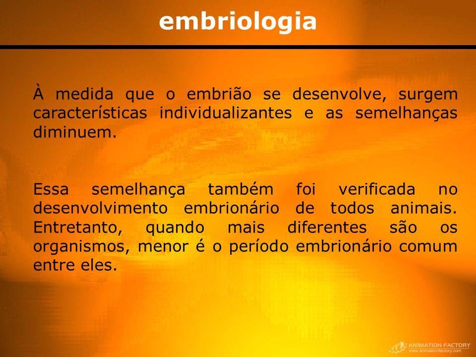 embriologia À medida que o embrião se desenvolve, surgem características individualizantes e as semelhanças diminuem.