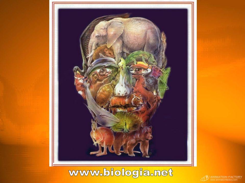 www.biologia.net