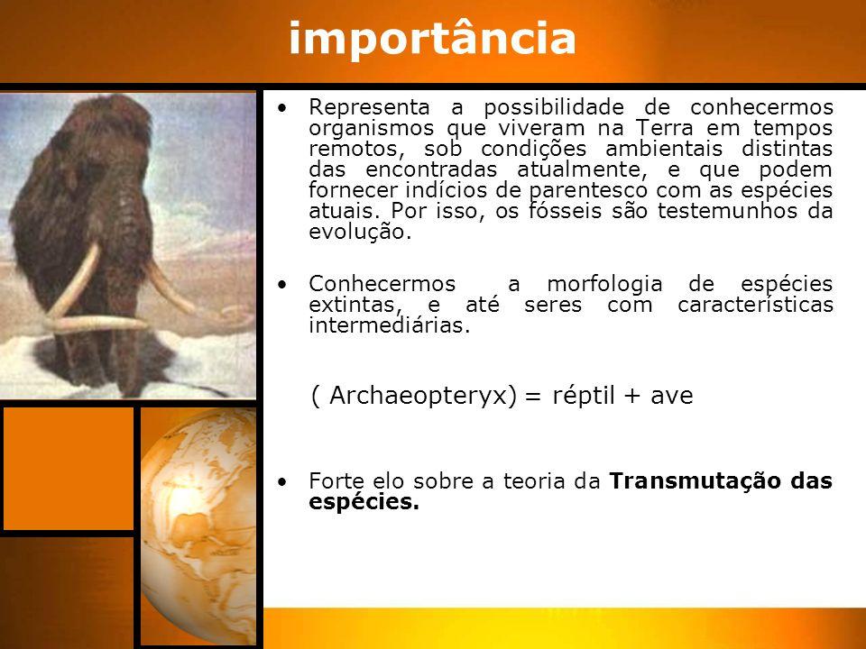 importância ( Archaeopteryx) = réptil + ave