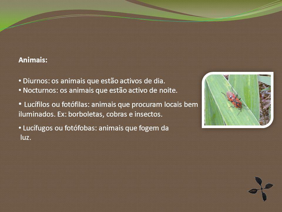 Animais: Diurnos: os animais que estão activos de dia. Nocturnos: os animais que estão activo de noite.