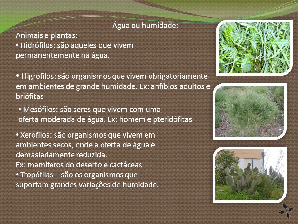 Água ou humidade: Animais e plantas: Hidrófilos: são aqueles que vivem. permanentemente na água. Xerófilos: são organismos que vivem em.