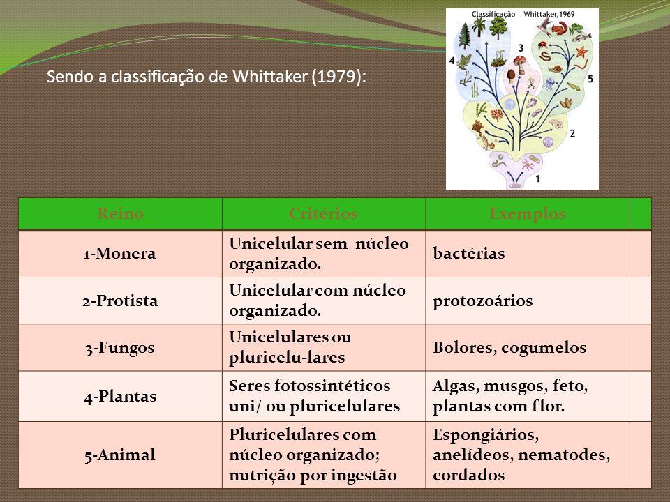 Sendo a classificação de Whittaker (1979):