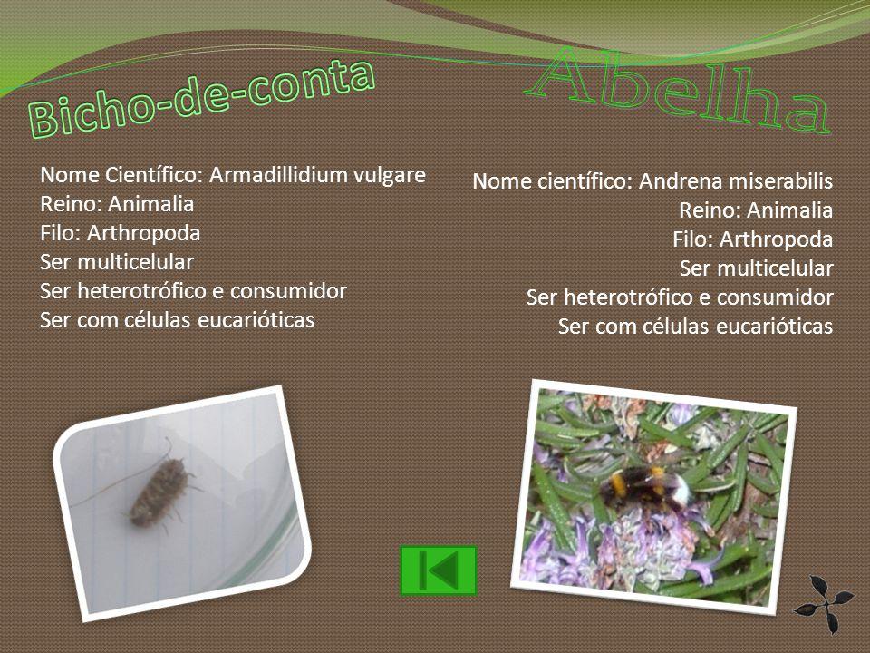 Bicho-de-conta Abelha Nome Científico: Armadillidium vulgare