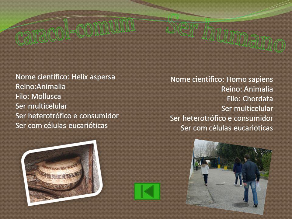 caracol-comum Ser humano Nome científico: Helix aspersa