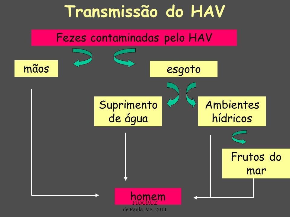 Fezes contaminadas pelo HAV