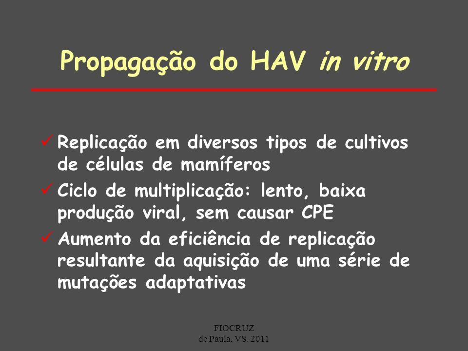 Propagação do HAV in vitro