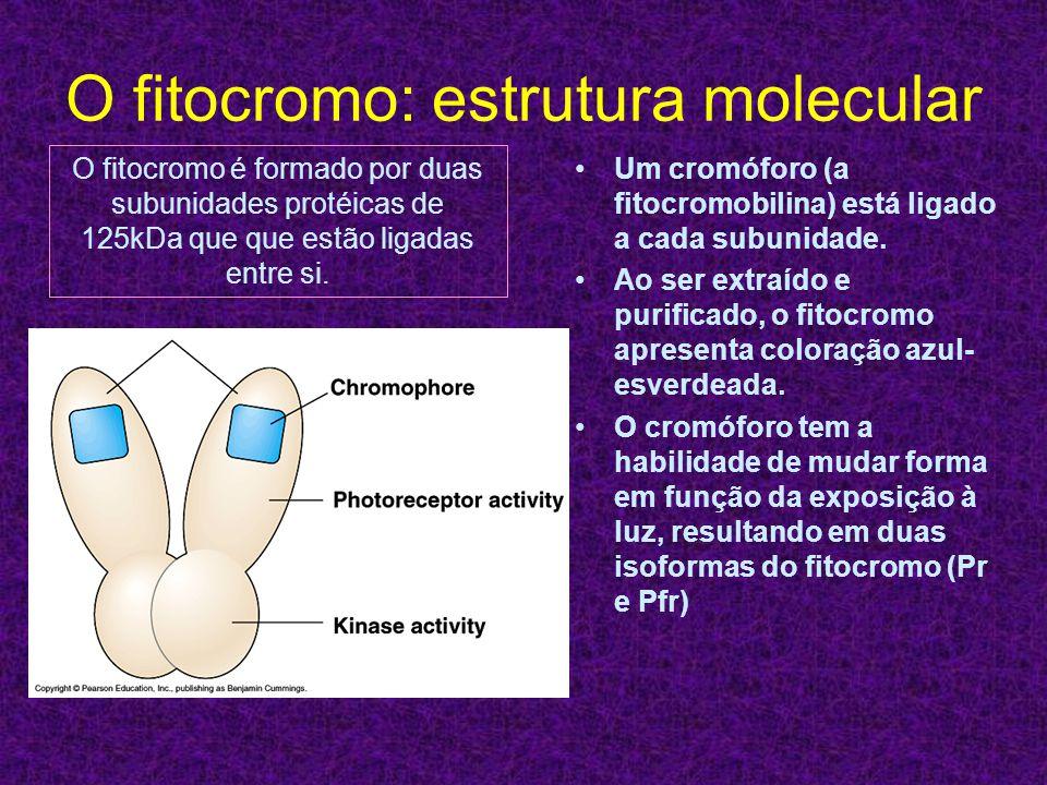 O fitocromo: estrutura molecular