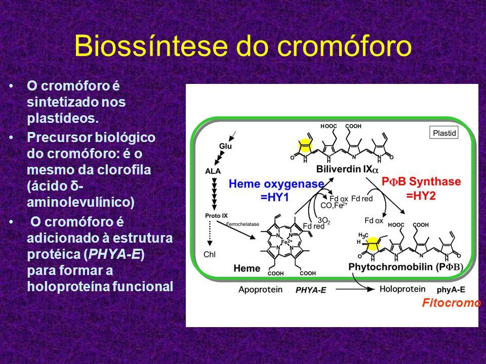 Biossíntese do cromóforo