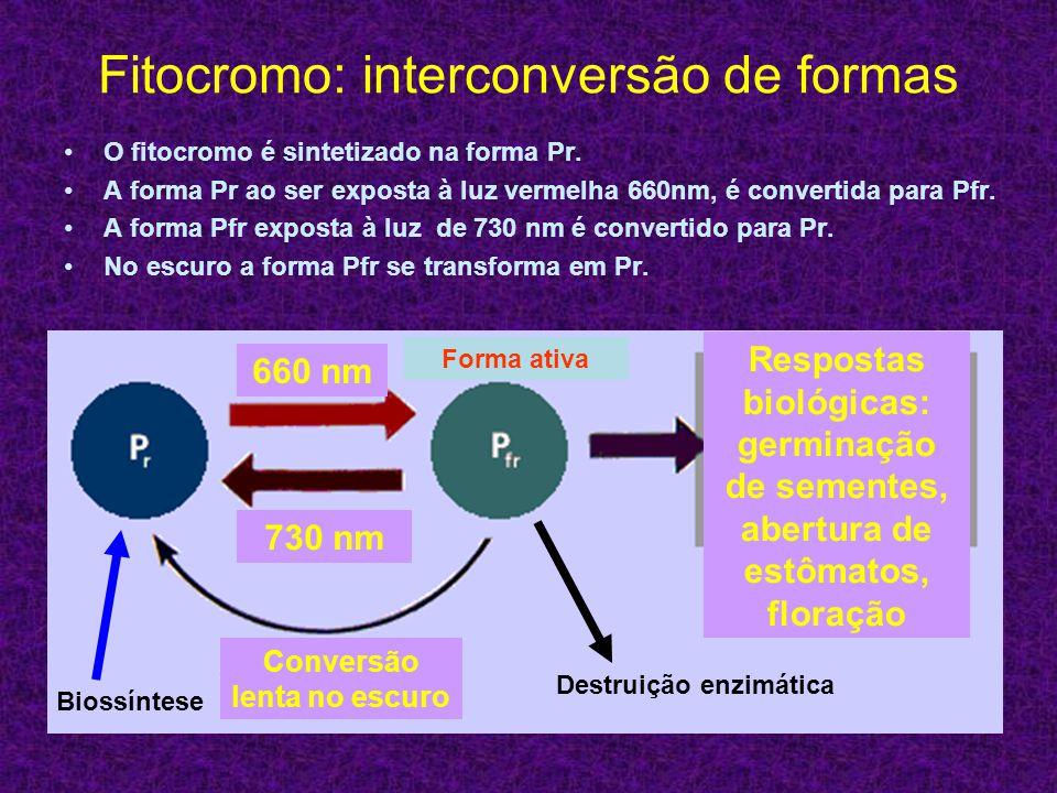 Fitocromo: interconversão de formas