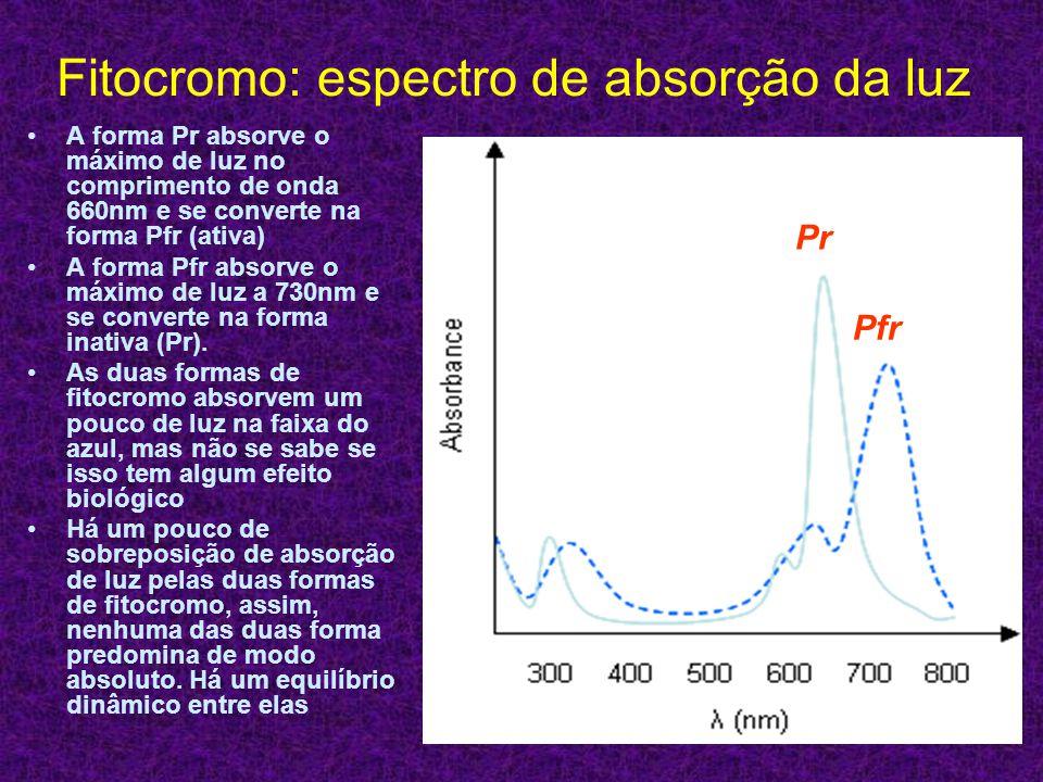 Fitocromo: espectro de absorção da luz