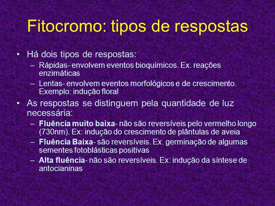 Fitocromo: tipos de respostas