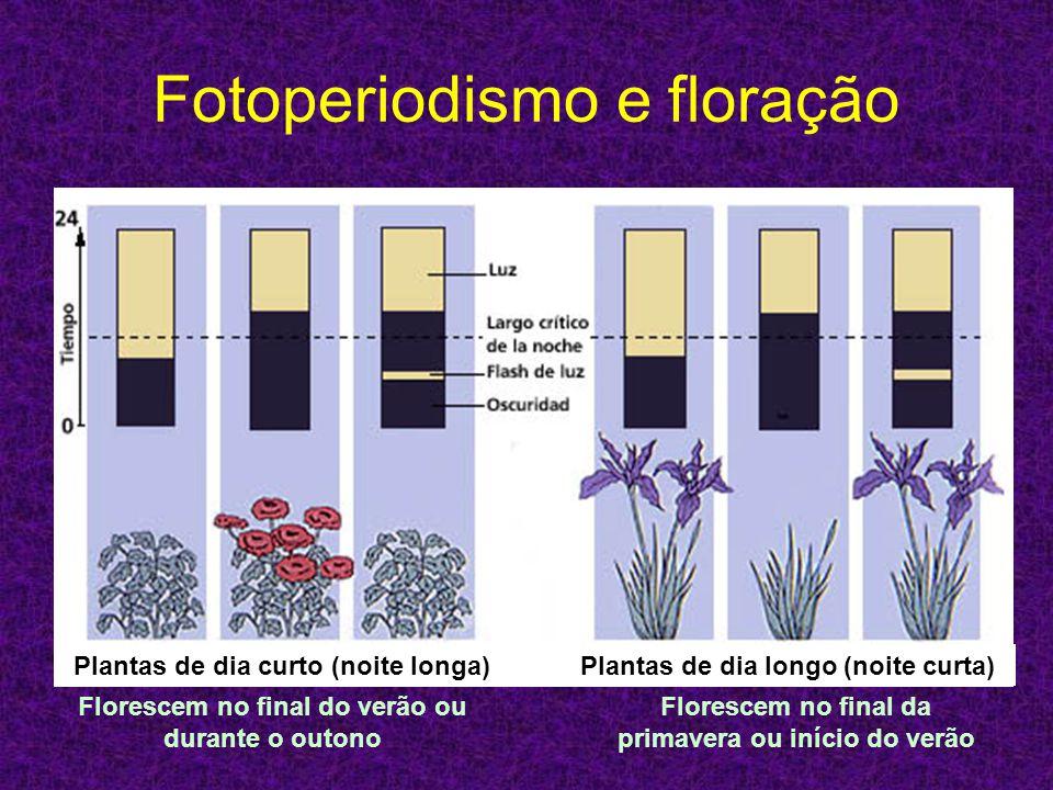 Fotoperiodismo e floração