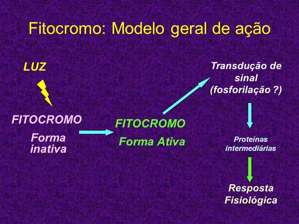 Fitocromo: Modelo geral de ação