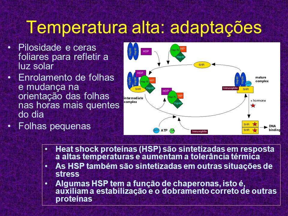 Temperatura alta: adaptações