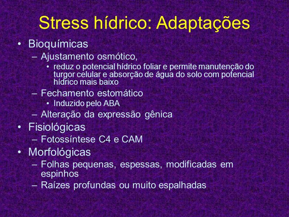 Stress hídrico: Adaptações