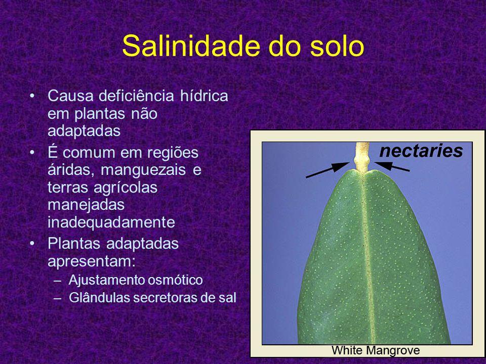 Salinidade do solo Causa deficiência hídrica em plantas não adaptadas