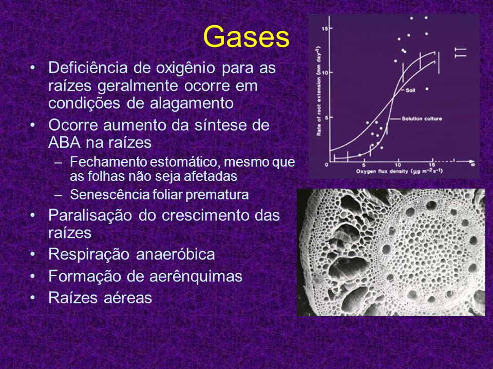 Gases Deficiência de oxigênio para as raízes geralmente ocorre em condições de alagamento. Ocorre aumento da síntese de ABA na raízes.
