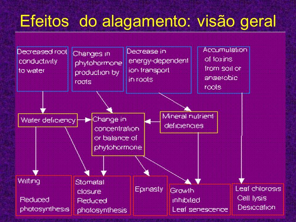 Efeitos do alagamento: visão geral