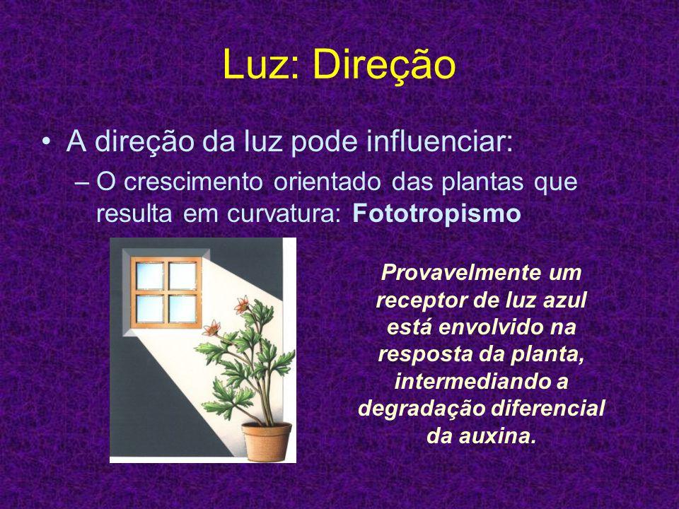 Luz: Direção A direção da luz pode influenciar: