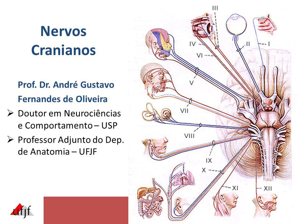 Nervos Cranianos Prof. Dr. André Gustavo Fernandes de Oliveira