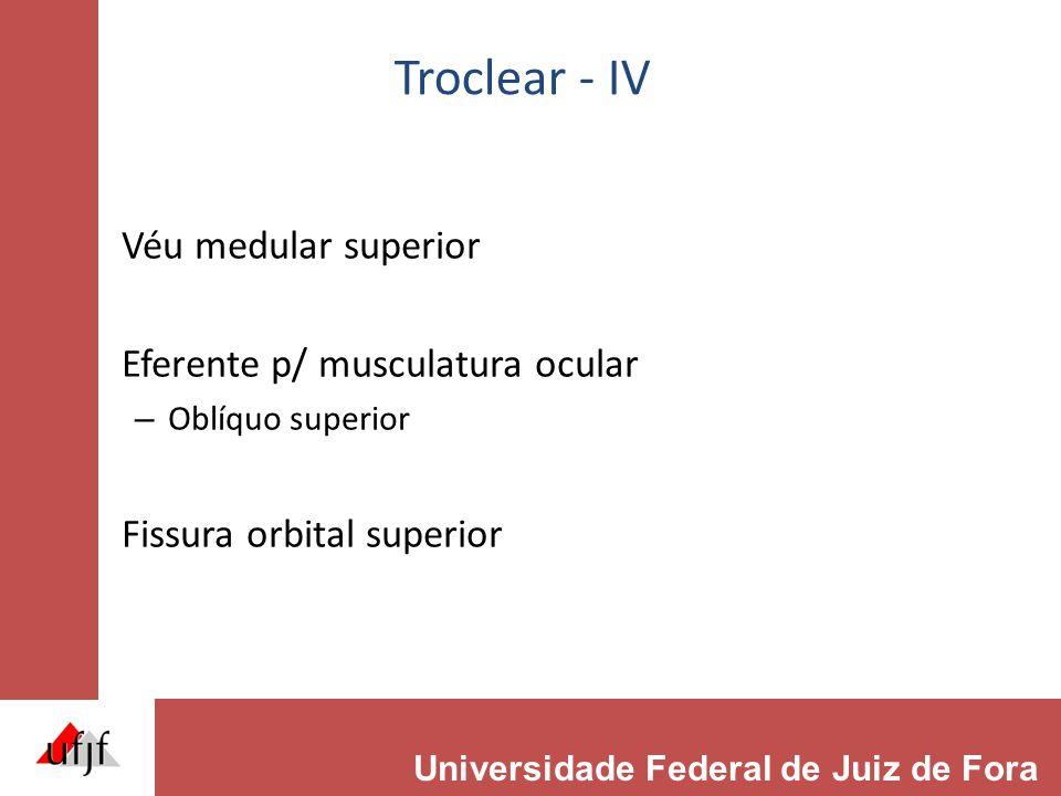 Troclear - IV Véu medular superior Eferente p/ musculatura ocular
