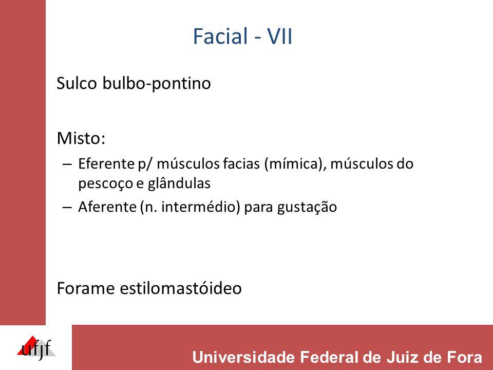 Facial - VII Sulco bulbo-pontino Misto: Forame estilomastóideo